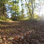 57. trulli del bosco jpg