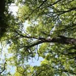 68. trulli del bosco