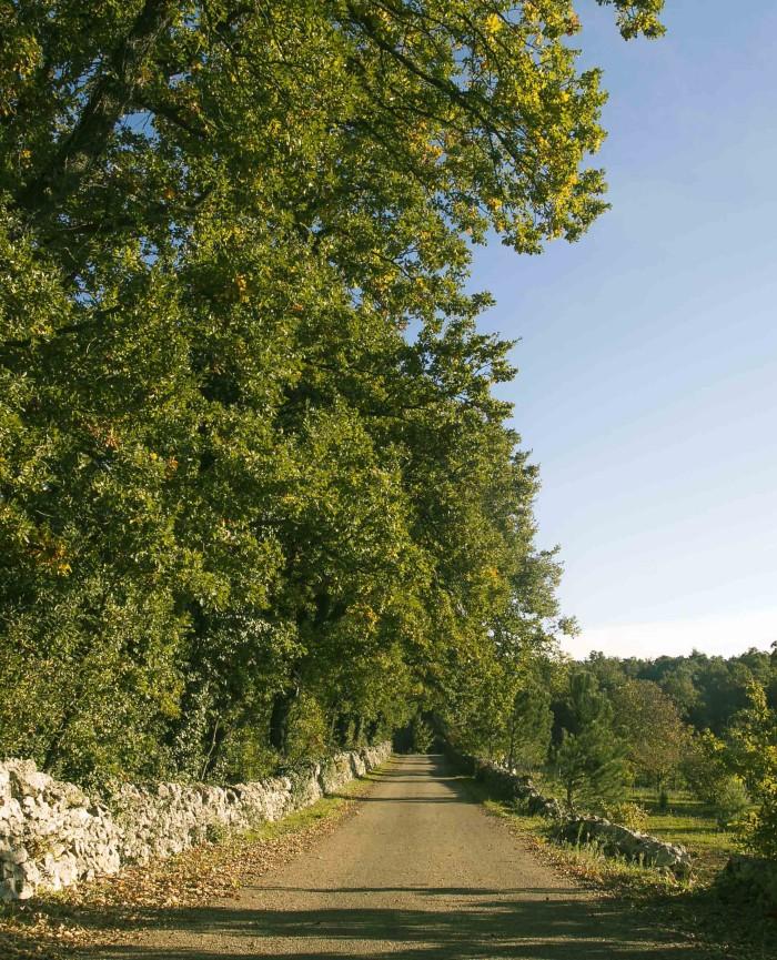 18. trulli del bosco jpg