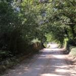 52. trulli del bosco jpg